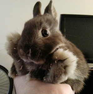 my rabbit Fluffy